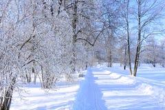 冬天冷淡的天在加特契纳公园,俄罗斯 免版税库存照片