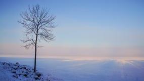冬天冷淡的天 在一个域的冬天结构树与蓝天 免版税库存图片