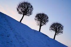 冬天冷淡的天 在一个域的冬天结构树与蓝天 图库摄影