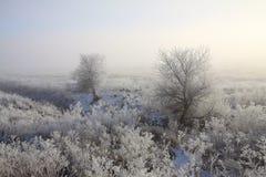 冬天冷淡的树和领域 库存图片