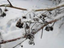 冬天分支特写镜头 免版税库存照片