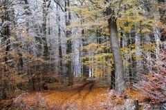 冬天初期在一条秋季森林道路的有五颜六色的fol的 库存照片