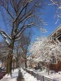 冬天到来 美丽完全 免版税库存图片