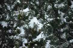 冬天剪影在新年假日 免版税图库摄影