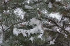 冬天剪影在新年假日 免版税库存照片
