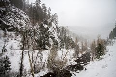 冬天包括在真旗鱼, SD的谷 库存图片