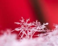 冬天卡片,照片真正的雪花 库存图片