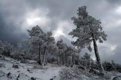 冬天印刷品在马德里山脉  图库摄影