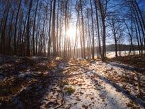 冬天印象在一个晴天在巴法力亚森林里 免版税库存图片