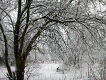 冬天印象-黑白22 库存图片
