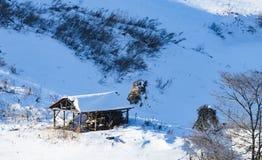 冬天印象  免版税库存图片