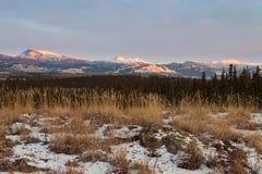 冬天原野风景育空地区加拿大 库存图片