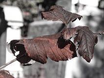 冬天叶子在坟园 库存图片