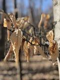 冬天叶子在阳光下 库存图片