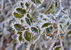 冬天叶子 免版税图库摄影