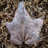 冬天叶子 免版税库存照片