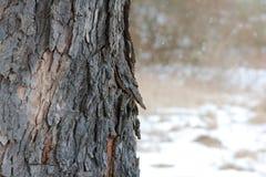 冬天吠声 图库摄影