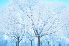冬天和冰的白色胜利 免版税图库摄影