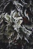 冬天和圣诞节边界 免版税库存照片