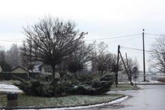 冬天和树 免版税库存图片