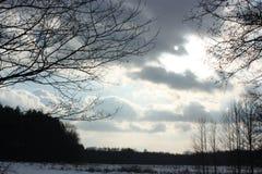 冬天和树 库存图片