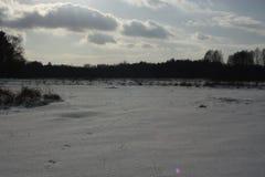 冬天和树 免版税库存照片