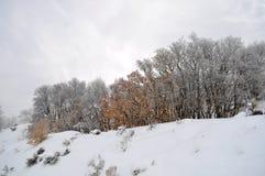 冬天和秋天碰撞  库存照片