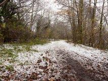 冬天国家泥泞的路通过森林足迹湖边 免版税库存照片