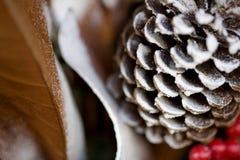 冬天圣诞节季节多雪的杉木锥体、莓果和叶子 免版税库存照片