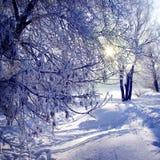 冬天圣诞节森林 库存图片