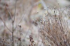 冬天在一个冷淡的风景的种子头 免版税库存照片