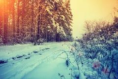 冬天在乡下 库存图片