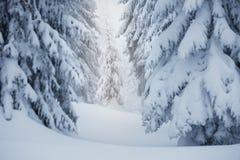 冬天在云杉的森林里 图库摄影