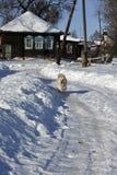 冬天在俄国村庄 免版税库存照片