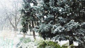 冬天在克拉斯诺达尔 免版税库存图片