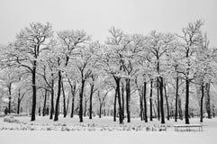 冬天在公园 库存图片
