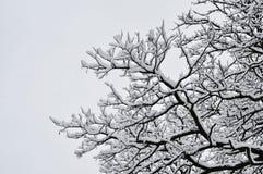 冬天在公园 免版税库存图片