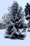 冬天在公园 免版税库存照片