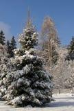 冬天在冬天和在一种颜色的夏天 免版税库存图片
