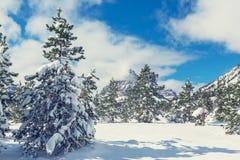 冬天在冰川公园 库存图片