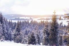 冬天在冷杉木的妙境雪 库存照片