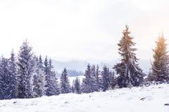 冬天在冷杉木的妙境雪 免版税库存图片