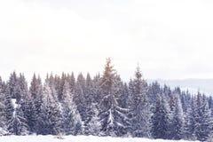 冬天在冷杉木的妙境雪 免版税库存照片