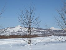 冬天在堪察加 雪和小山和树霜视图  库存照片