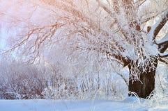 冬天在多雪的森林冬天风景妙境场面的风景冬天树 免版税库存图片