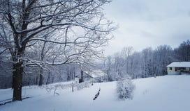 冬天在弗吉尼亚 免版税图库摄影
