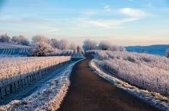 冬天在德国葡萄园里 库存照片