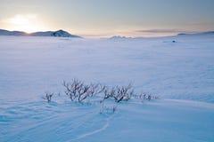 冬天在拉普兰-瑞典 免版税库存照片