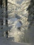 冬天在早晨星期日的森林路径 免版税库存照片