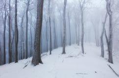 冬天在有树的有雾的frot森林里 免版税库存照片